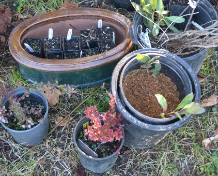 plants from Yamhill sale