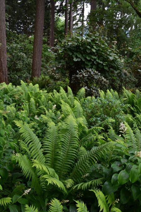 unknown ferns
