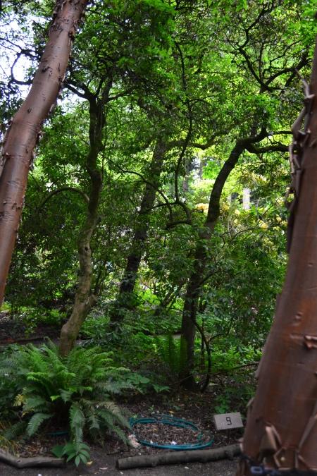 sapling trunks