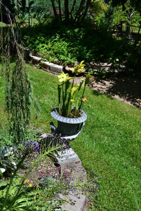 carniverous plants