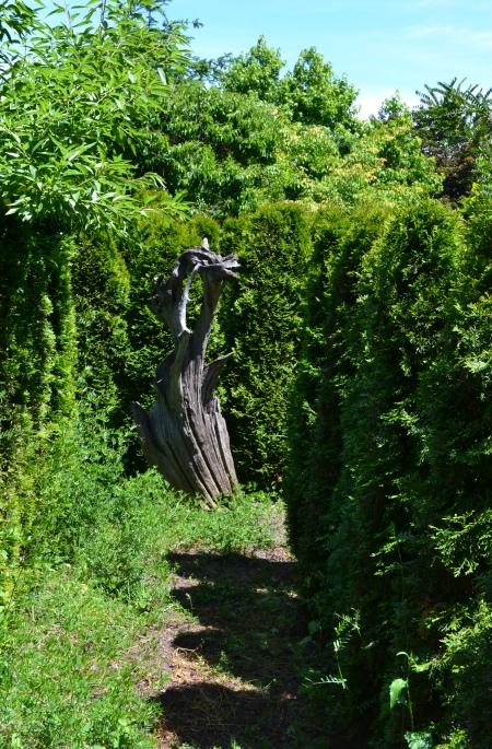 Arborvitae labyrinth