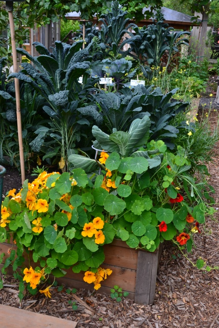 Common Ground raised beds