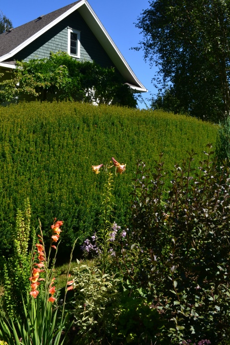 other side of the hedge