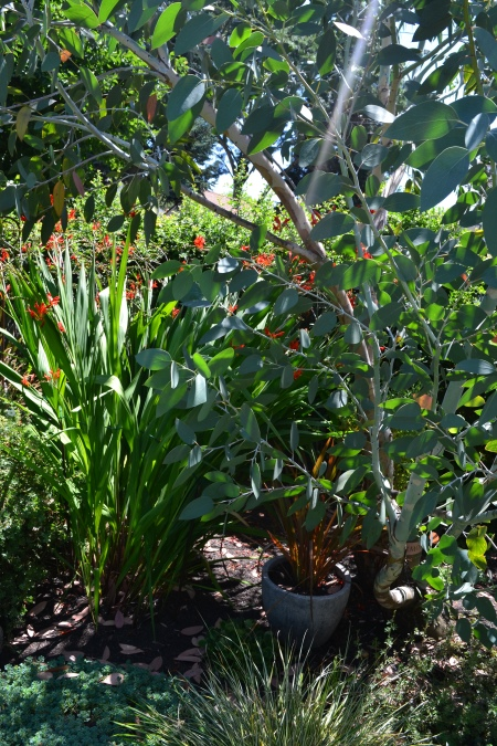 Crocosmia and Eucalyptus