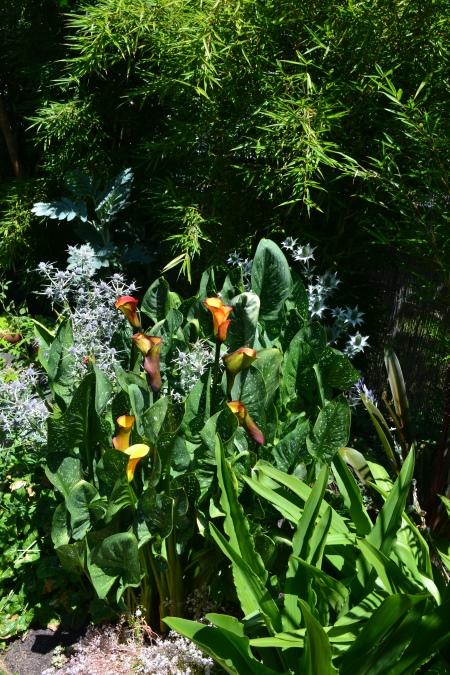 cala lily & Eryngium