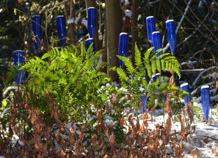 bottle garden with autumn fern