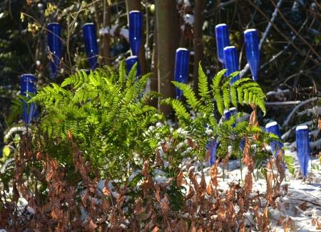 bottle garden with autumn fern