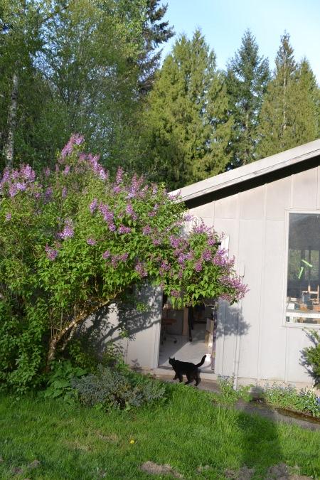 lilac010.jpg