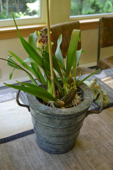 orchid013.jpg