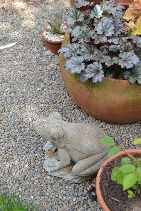 Marilyn's frog