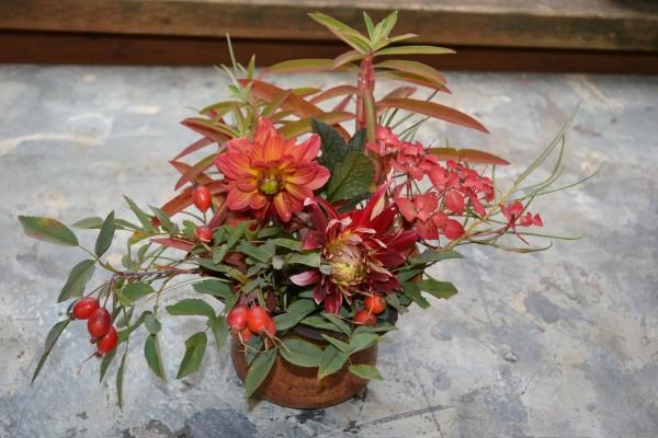 Dahlia 'Groovy', Euphorbia 'Fire Charm', Rosa glauca